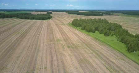 recentemente : camera flies along harvested field past forest with glades
