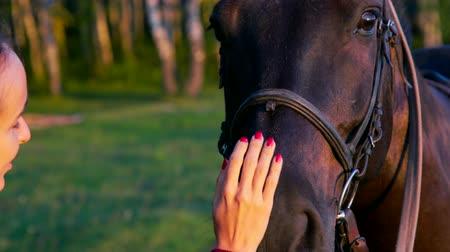 kůň : macro lady hands stroke brown horse face against lawn