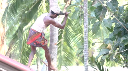 machete : indian laborer stands on roof cuts palm trunk with machete