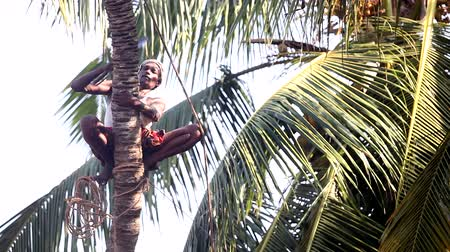 machete : indian man with rope fixes chops palm tree trunk over ground