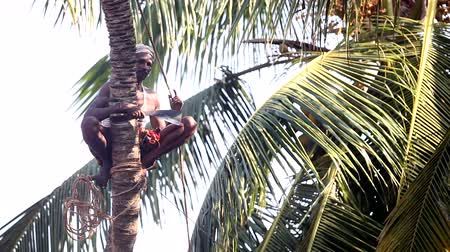 machete : man sits on palm tree trunk on special stick and talks