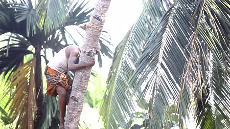 yelek : brave guy climbs down clasping palm tree trunk by leaves Stok Video