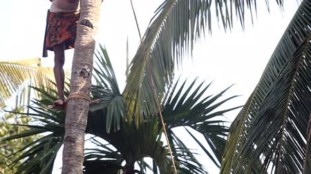 machete : worker stands on support cuts palm tree top with machete