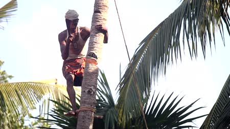 machete : man stands on support nicks in trunk to knock down palm tree Stock Footage