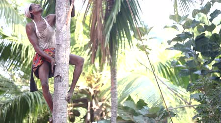 toka : Indian man climbs down clasping tree trunk like monkey
