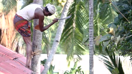 machete : motion from laborer cutting trunk with machete to palm top Stock Footage