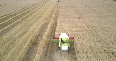 gather : aerial view harvester moves gathering wheat against trees