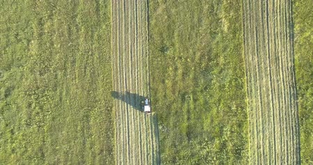 mow : mower with rotary cutters drive along farmland in summer
