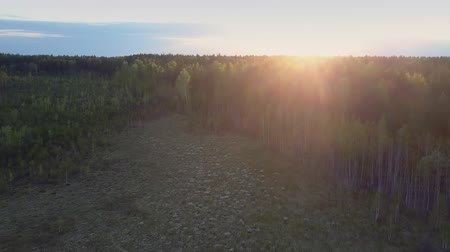 wood glade : golden sunlight over horizon and large forest glade downward Stock Footage