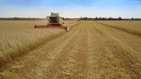 gather : combine gathers rich golden rye harvest in wide field Stock Footage