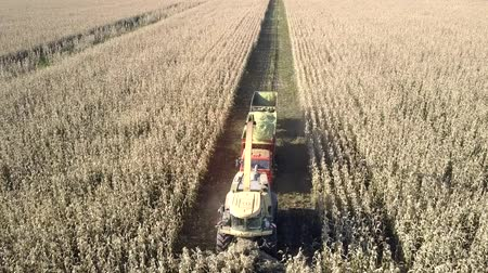 polana : upper view harvester cuts clearing drives to field end Wideo