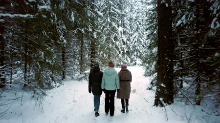 people discuss topics walking along snowy path in forest Vídeos