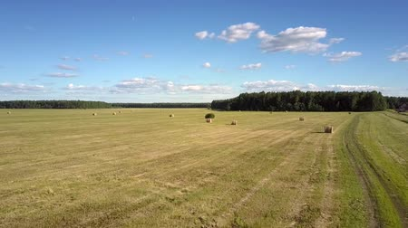 тюк : aerial landscape hay harvested field against forest Стоковые видеозаписи