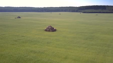 palheiro : aerial motion to stacked bales on grass field by forest
