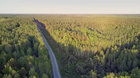 continuous : tremendous high aerial view modern long empty asphalt road cuts through huge pine forest at sunset