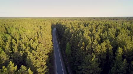 sürekli : pictorial aerial landscape pine tops of large continuous forested area with road in summer evening under clear sky Stok Video