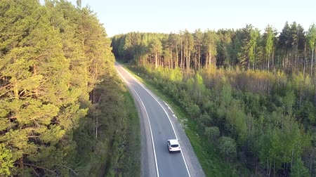 działka : pictorial aerial view car passes by young pine forest plot planted along road crossing deep wild pine woods