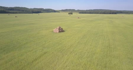 yem : aerial idyllic countryside drone flies above roll haystack in green grass field among boundless forests on sunny day Stok Video