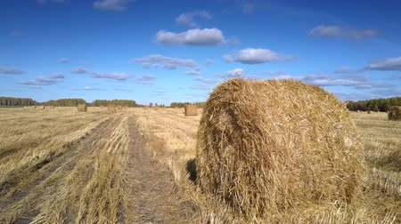 forragem : large dry straw roll lies on foreground in empty gold harvested field against boundless sky with clouds