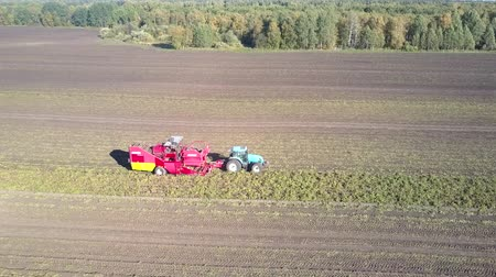 sklizené : beautiful aerial view tractor pulls modern red potato harvester on vast field against boundless forest on autumn day