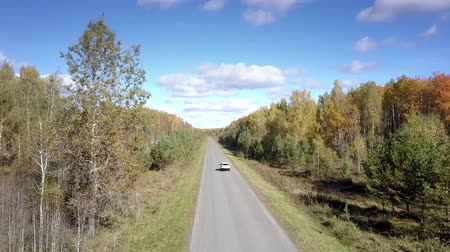 cam : flycam follows white car driving along asphalt road stretching between autumn birch and pine forests on sunny day