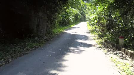 pole street : pictorial white wild road with tropical green tree shadows and falling leaves on summer day in Vietnam