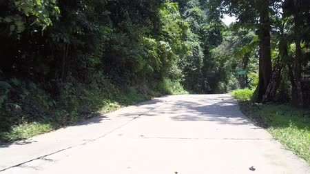 silvicultura : wonderful jungle road with green tree shadows near red white and green road signs on tropical day