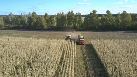 yem : panoramic view self-propelled forage harvester with field grinder mows and loads cut corn stems into vehicle