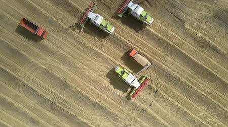 sierpien : TYUMENRUSSIA - AUGUST 31 2018: Wonderful vertical aerial view modern harvesters stand on yellow field and driver runs to loaded orange truck on August 31 in Tyumen