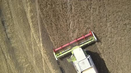 gather : Wonderful close vertical aerial view modern harvester drives and gathers wheat with huge rolling blades
