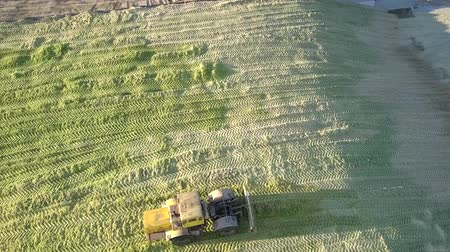 yem : upper view modern powerful forage tractor rams feed silage in large pit on sunny autumn day