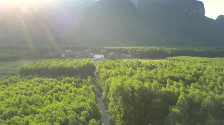 плато : narrow asphalt road crosses beautiful green thick forest and passes tiny village under bright evening sunshine