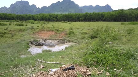 bika : wide lush grassland and small lake with lying water buffaloes against wood and mountains upper view