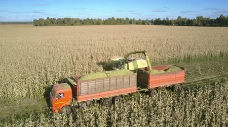 выполнять : close motion above field harvester carries out unloading chopped crop into truck trailer in autumn Стоковые видеозаписи