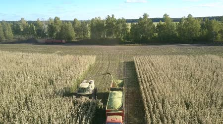 yem : upper view harvester mows and chops corn stems driving near vehicle along field against natural landscape