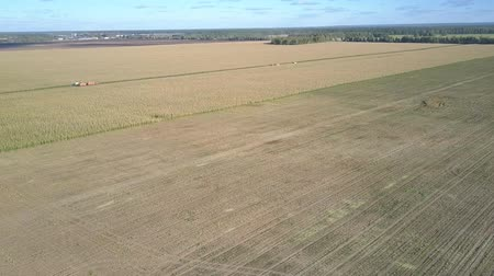 trator : bird eye view boundless agrarian corn fields partially covered with ripe crop against peaceful landscape