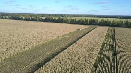 milharal : beautiful panoramic view crop farmland and self-propelled forage harvester against peaceful rural nature
