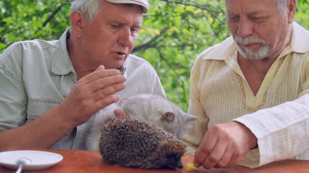 еж : bearded senior citizen feeds hedgehog near talking aged man with cat in hands at wooden table. Concept freetime activity in nursing home