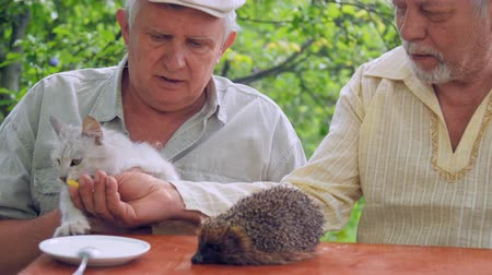 erizos : aged people feed white cat sitting at brown table with hedgehog and spoon in plate against green trees. Concept wrong science