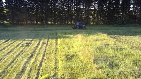 furrow : aerial picture mowing-machine turns to next furrow to cut green hay grass to swathes in trees shadow on hot summer day