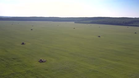 scatters : pictorial aerial panorama huge harvested grass field with rare scattered haystacks against vast forest
