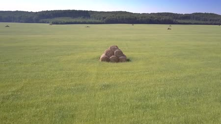 резать : flycam moves around single hayrick stacked from bales in beautiful green grass field against forest under clear blue sky