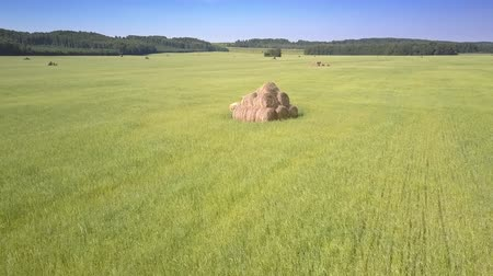 bales : drone rises over hayrick stacked from rolls in green grass field among pictorial forestry landscape under clear blue sky Stock Footage