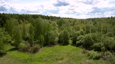 лесное хозяйство : exciting endless green dense forest surrounds small meadow on sunny summer day aerial view. Concept unspoiled nature and wildlife
