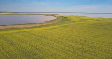 점토 : beautiful aerial panorama vast blooming yellow rape field between large lakes with clay banks under bright blue sky 무비클립