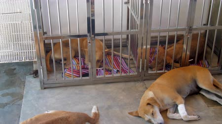 kennel : treated ginger dogs have rest sleeping on grey cool floor and in metal lattice cages with carpets in animal shelter