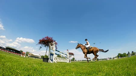 horse racing : Horsewoman on brown horse in jump over a hurdle slow motion video