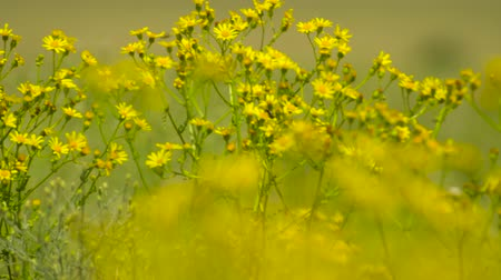grass flowers : Wild grass with yellow flowers - beautiful summer landscape