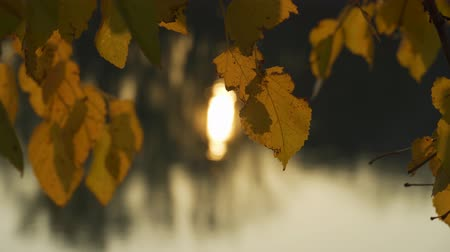 Yellow autumn leaf closeup, sun reflecting in river at sunset. Beautiful nature background.
