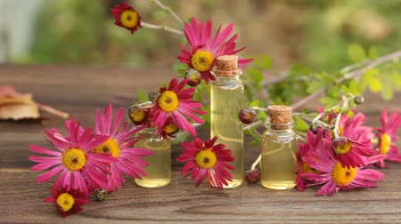 essence of flowers : chrysanthemum essential oil in bottle on table Stock Footage